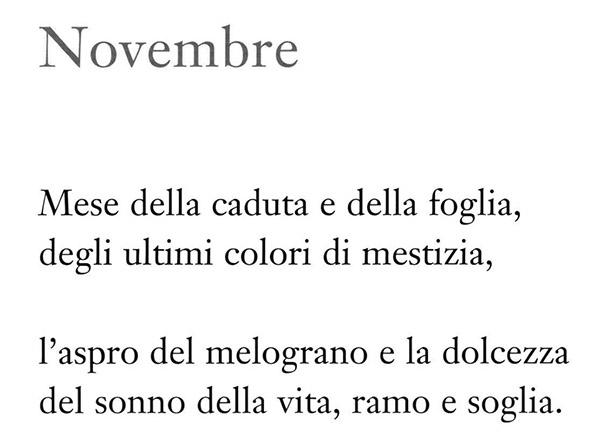 11 novembre1