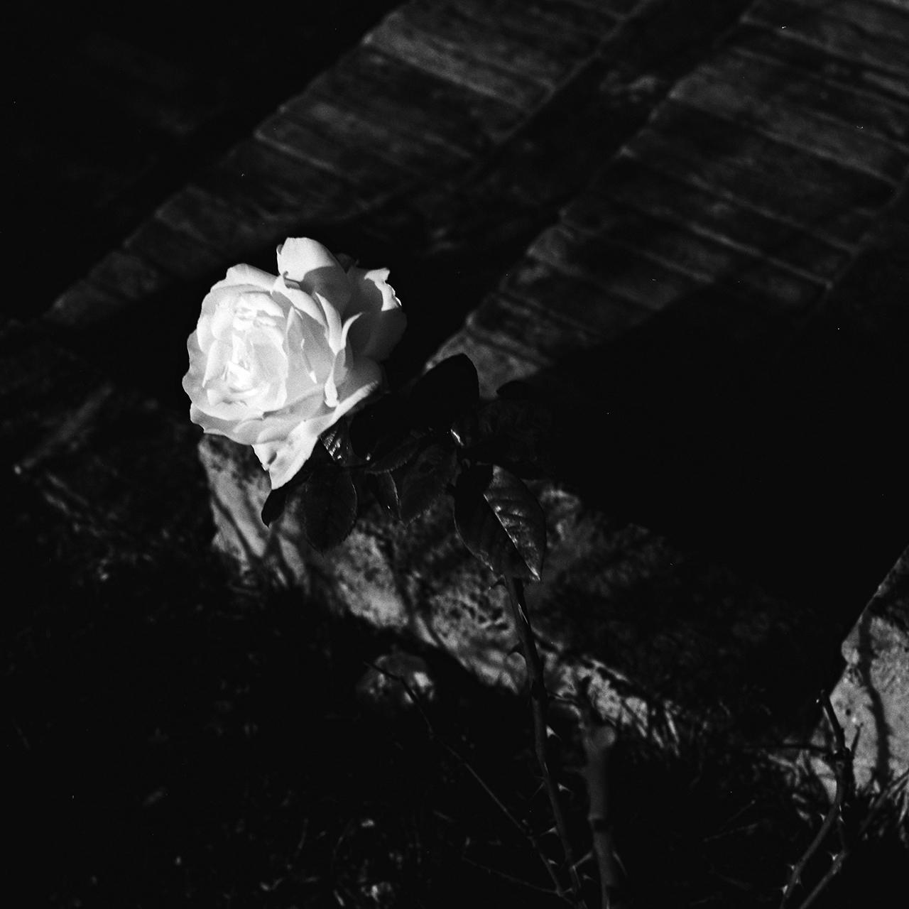 cutini-memoria-di-frammenti-03