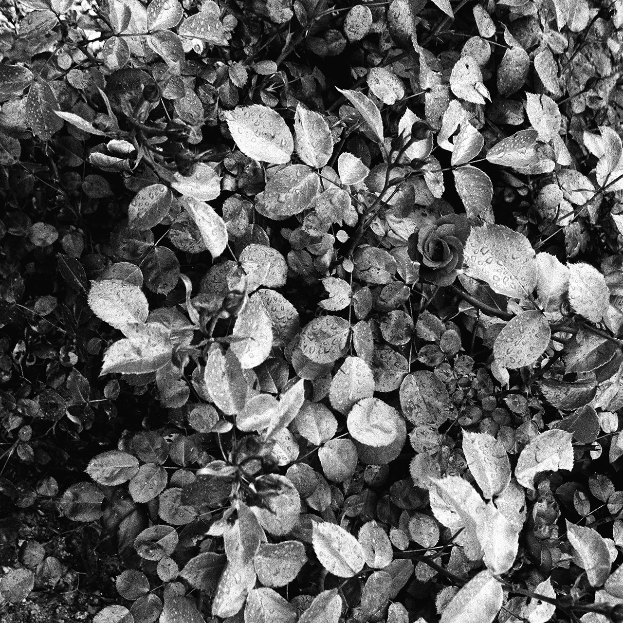 cutini-memoria-di-frammenti-09